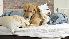 Espiando a las mascotas en el hogar con Wearables para mascotas