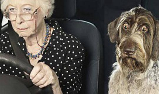 क्या आपके तनाव आपके पालतू जानवर और उन तुम प्यार से पीडि़त?