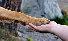 Cuộc sống tâm linh của động vật