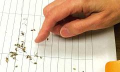 A medida que el cambio climático amenaza el suministro de alimentos, el ahorro de semillas es un antiguo acto de resiliencia