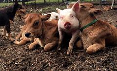 Wat is die grondbeginsels om getraumatiseerde diere te help?
