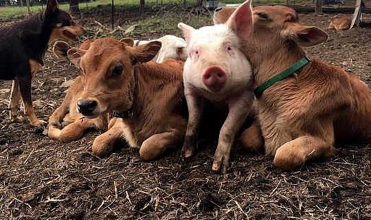 외상 화 된 동물을 돕는 기본 사항은 무엇입니까?