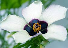Blomme se geheime sein na bye en ander wonderlike nanotegnologieë wat in plante verborge is