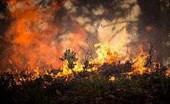 कैसे जंगल की आग धूम्रपान आपके स्वास्थ्य को प्रभावित करता है