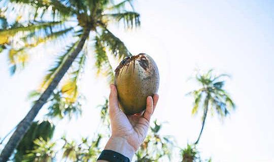 關於椰子油的5聲稱被揭穿