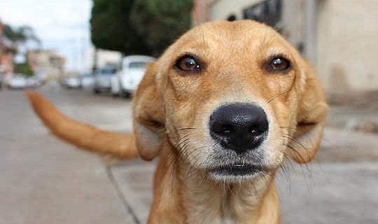 كيف الكلاب والقطط يمكن الحصول على يومهم في المحكمة