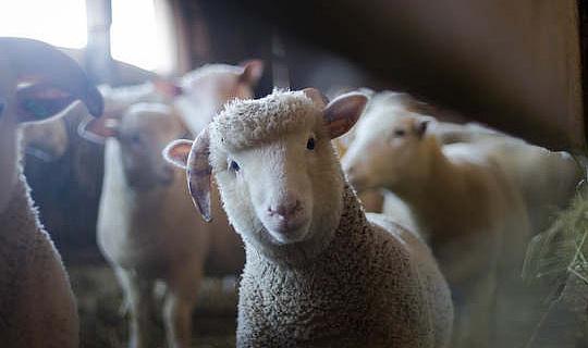 چرا برخی از ارتباطات حیوانات گیاهخوار نیستند