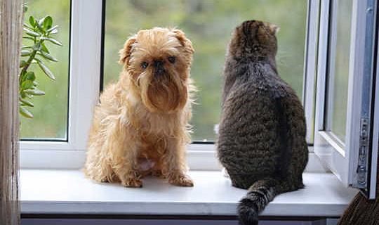 Die nuuskierige karakter van katte. Is hulle werklik meer Aloof?