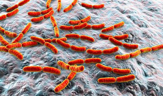 Kan din gutmikrober hindra din cancerbehandling?