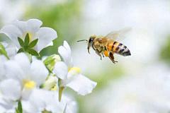 Hier is wat jy moet weet oor Honey Bee Stings
