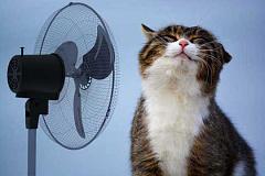 Cómo mantener a sus mascotas frescas sin soplar su factura de energía