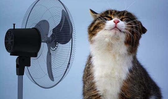अपनी ऊर्जा विधेयक को उड़ाते हुए अपने पालतू जानवरों को शांत रखने के लिए कैसे करें