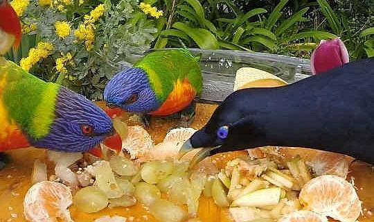 विभिन्न प्रजातियों को एक भोजन स्थान पर इकट्ठा हो सकता है। ब्राड वाकर, वार्तालाप