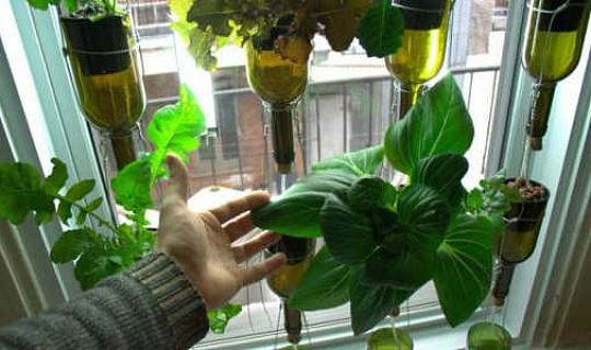 Vuilvrye binnenshuise tuin groei 'n jaar van weeklikse slaaie