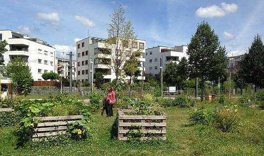 بهترین راه برای ارائه فضای سبز به اندازه کافی برای سلامتی و رفاه چیست