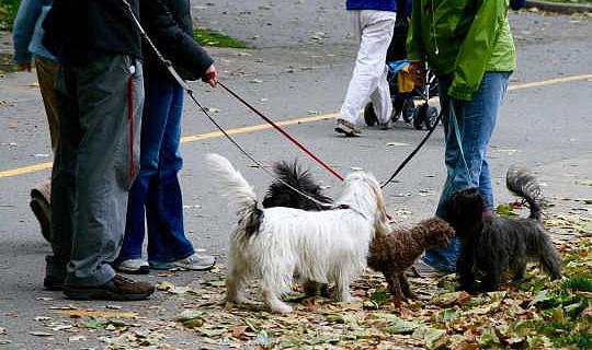 Cómo nuestras mascotas fortalecen lazos en los vecindarios