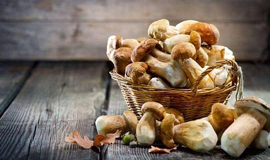 저지방 버섯이 영양 별이되는 방법