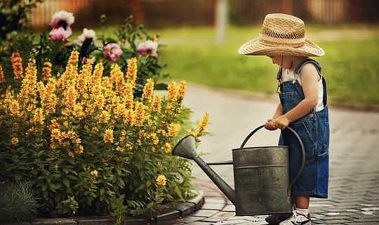 El mejor momento para regar sus plantas durante una ola de calor
