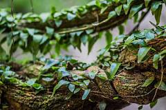 Este psicodélico amazónico puede aliviar la depresión severa