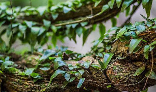 Psychedelic hii ya Amazonian Inaweza Kupunguza Unyogovu Mkubwa