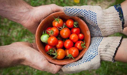 Hur gemenskapens trädgårdsarbete förbättrar hälsan och ger en mening med syftet