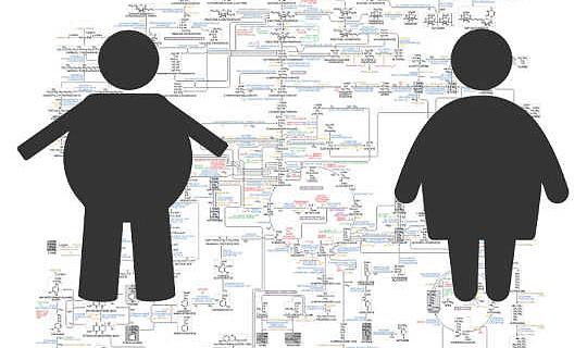 Existem muitos tipos de obesidade, então qual deles é importante para sua saúde?
