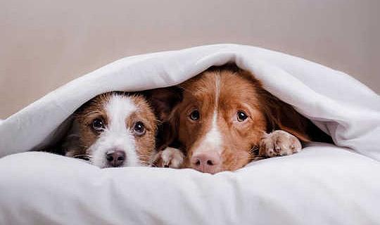 So halten Sie Ihr Haustier bei Gewitter und Feuerwerkern glücklich
