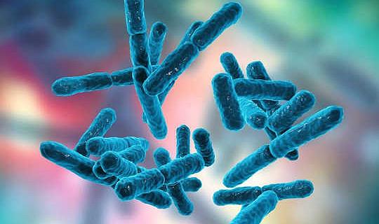 ¿Es seguro usar probióticos y prebióticos para tratar la enfermedad?