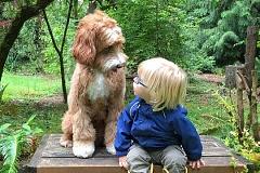 ¿Qué está pensando realmente tu perro?