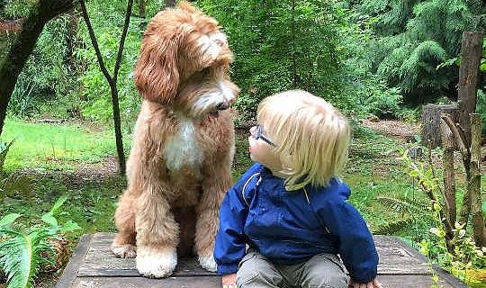 आपका कुत्ता वास्तव में क्या सोच रहा है?