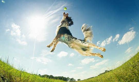 Köpekler Gerçekten Duygular Var mı?
