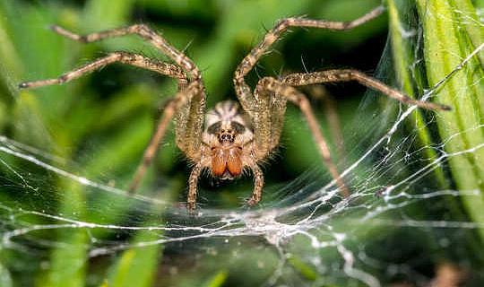 蜘蛛嚇唬我,但我也發現它們很有魅力