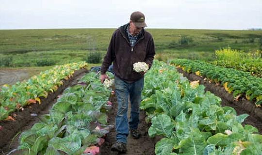 Todo lo que necesita saber sobre Fresh Produce y E. Coli