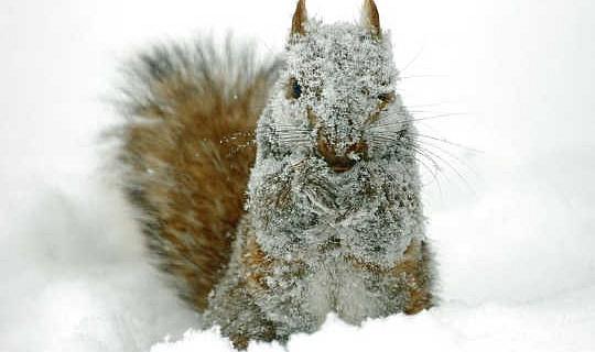 L'hiver est-il misérable pour la faune?
