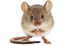 5 Autres animaux Outre les humains qui prennent le nettoyage au sérieux