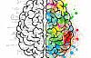 चरम पुरुष मस्तिष्क के सिद्धांत आत्मकेंद्रित की पुष्टि की