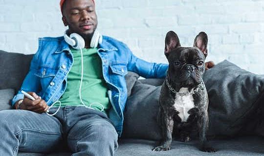 ¿Nos entienden los gatos y los perros cuando nos mudamos o ladramos?