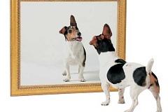 Wie sich die Persönlichkeit Ihres Hundes im Laufe der Zeit verändern kann