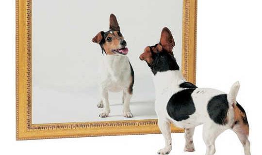 Bagaimana Keperibadian Anjing Anda Boleh Berubah Masa