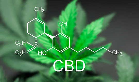 Composés de cannabis ont été montrés au cancer du côlon lent dans le laboratoire