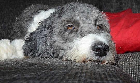 Hoe uw huisdieren te beschermen tegen marihuana vergiftiging