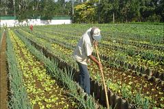Comment l'agriculture urbaine peut améliorer la sécurité alimentaire dans les villes américaines