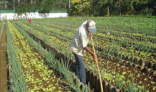 امریکی شہروں میں شہری زراعت کس طرح فوڈ سیکورٹی کو بہتر بنا سکتی ہے