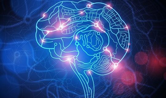 मस्तिष्क का मानचित्रण: वैज्ञानिक 180 अलग-अलग क्षेत्रों को परिभाषित करते हैं, लेकिन अब क्या?
