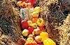 Kipawa cha Mchanga: Jinsi Composting Inajenga Jamii