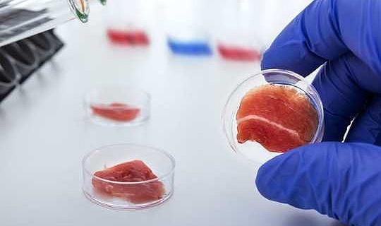 Bör labbodlat kött märkas som kött när det är tillgängligt för försäljning?