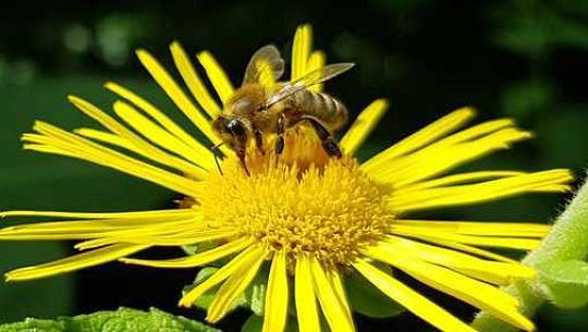 꿀벌은 우리가 생각하는 것보다 더 많은 숫자를 배울 수 있습니다 – 올바른 훈련 방법
