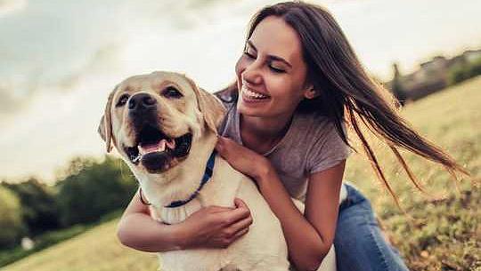 کتے واقعی تنہائی کا پیچھا کر سکتے ہیں