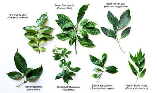 یہ دواؤں کے پودوں کو کینسر کی ترقی پر بریک رکھتا ہے