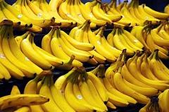 La búsqueda para salvar al plátano de la extinción